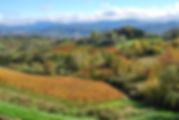 autunno1.jpg