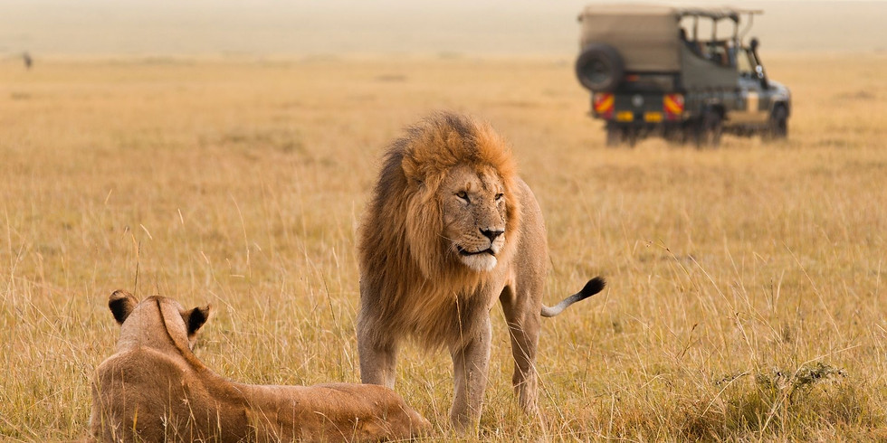 Generation Innovation Series: African Safari Tour & Guided Drawings