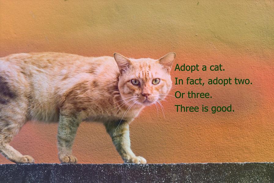 Cat%20Walking_edited.jpg