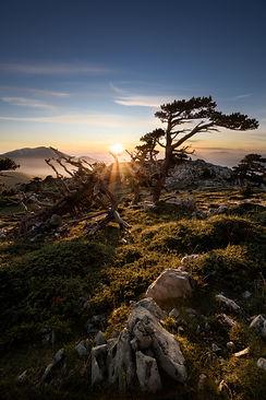 pino loricato tramonto(1).jpeg