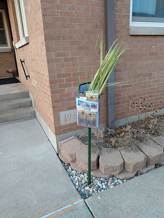 Palms at St.Agnes.jpg