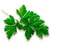 parsley-bottom.png