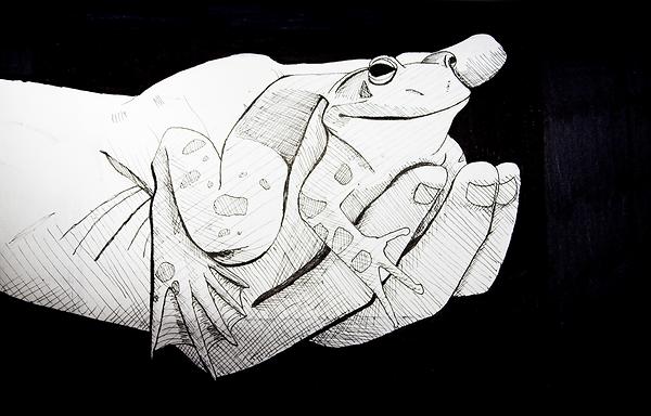 Frog being held