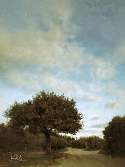 Apple Tree 1