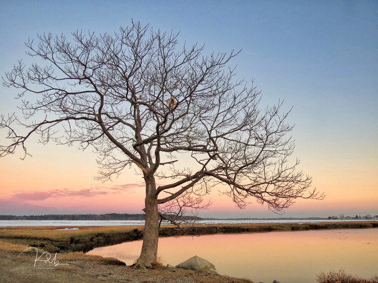 Lone Tree at the Marsh