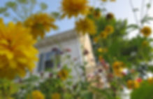 Pollinator Garden Design