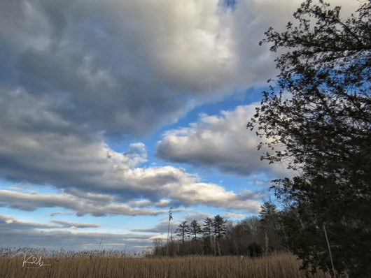 Hermit Island Marsh