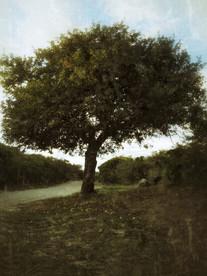 Apple Tree 2
