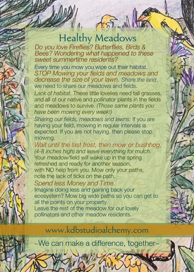Tips for a Healthy Maine Summertime Meadow