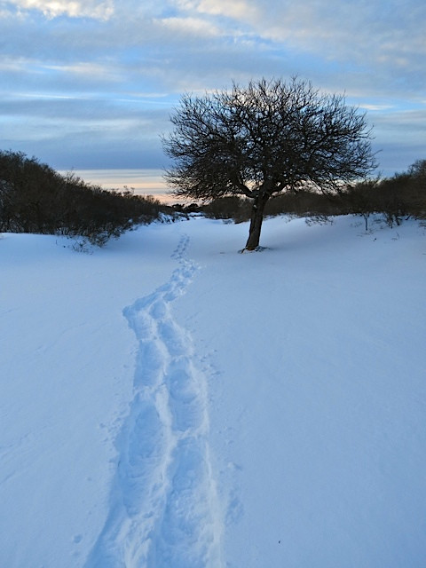 Hermit Island, leaving tracks.