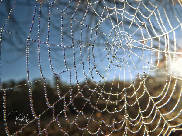 October Spider Web