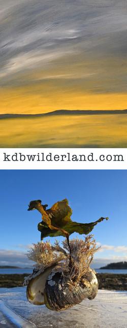 Wilderland Project