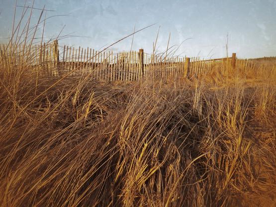 Kelp Shed, Head Beach Dune Grass