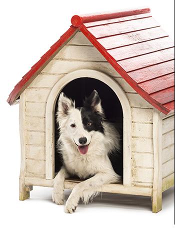 כלב בית