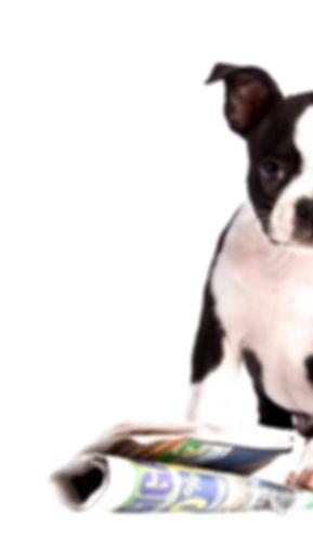 חיסון כלבים