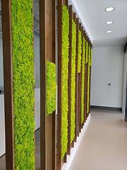 Moss_Wall_Design-NaturaHMTSide-View-e1558111032667.webp