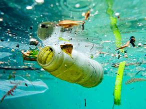 Summary: Eco-restoration of polluted aquatic ecosystem through rhizofiltration