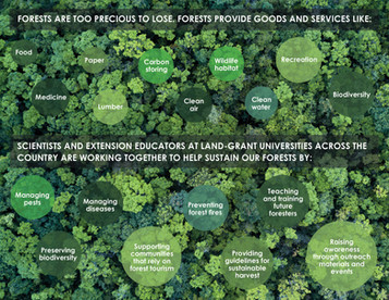 Sustaining our Forests