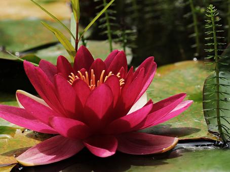 Os mais lindos jardins botânicos do mundo