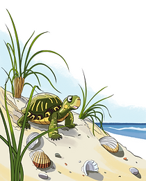 TinyTurtlePage1InitialColors.png