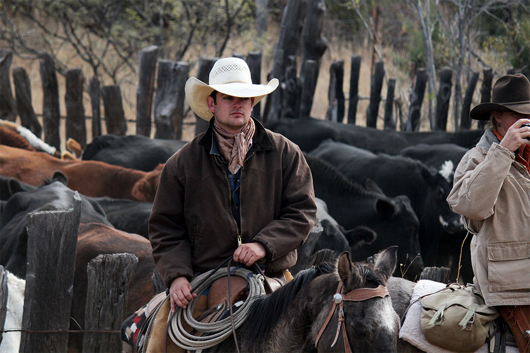 Cowboy on the Ranch