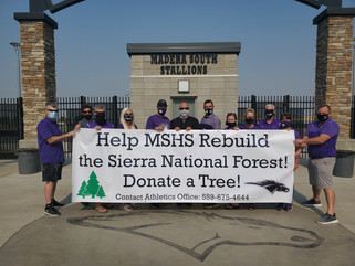 Gym studios replant trees in forest