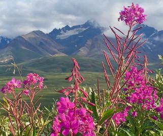 Taking a peek at the highest peak in North America