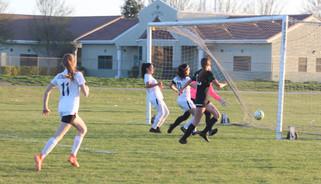 Overtime goal lifts Stallions over Hawks