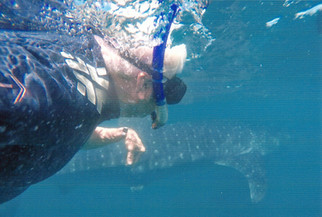 Travel: Maderan greets whale sharks underwater