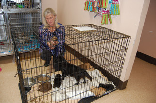 Mom and 13 pups dumped beside highway