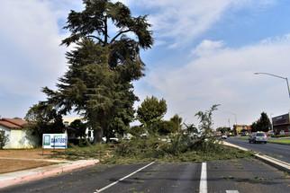 Part of tree falls, blocks roadway