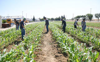 Madera corn lovers rejoice