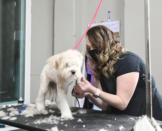 Madera grad opens pet grooming business