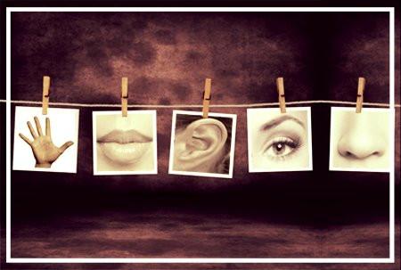 Viviendo a través de los sentidos