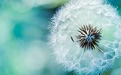 Luz boscani, estar en corazón, felicida, el gran libro de la vida, autoestima, autosanación, eliminar el estrés, gestionar las emociones, el secreto de lavida