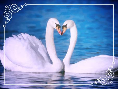 Hay historias de amor que cambian tu vida para siempre