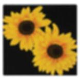 art_sun9.jpg