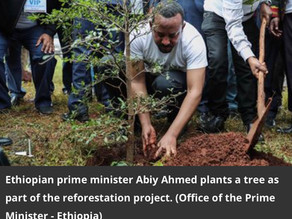 Ethiopia Plants 350 Million Trees in 12 Hours—a New Record