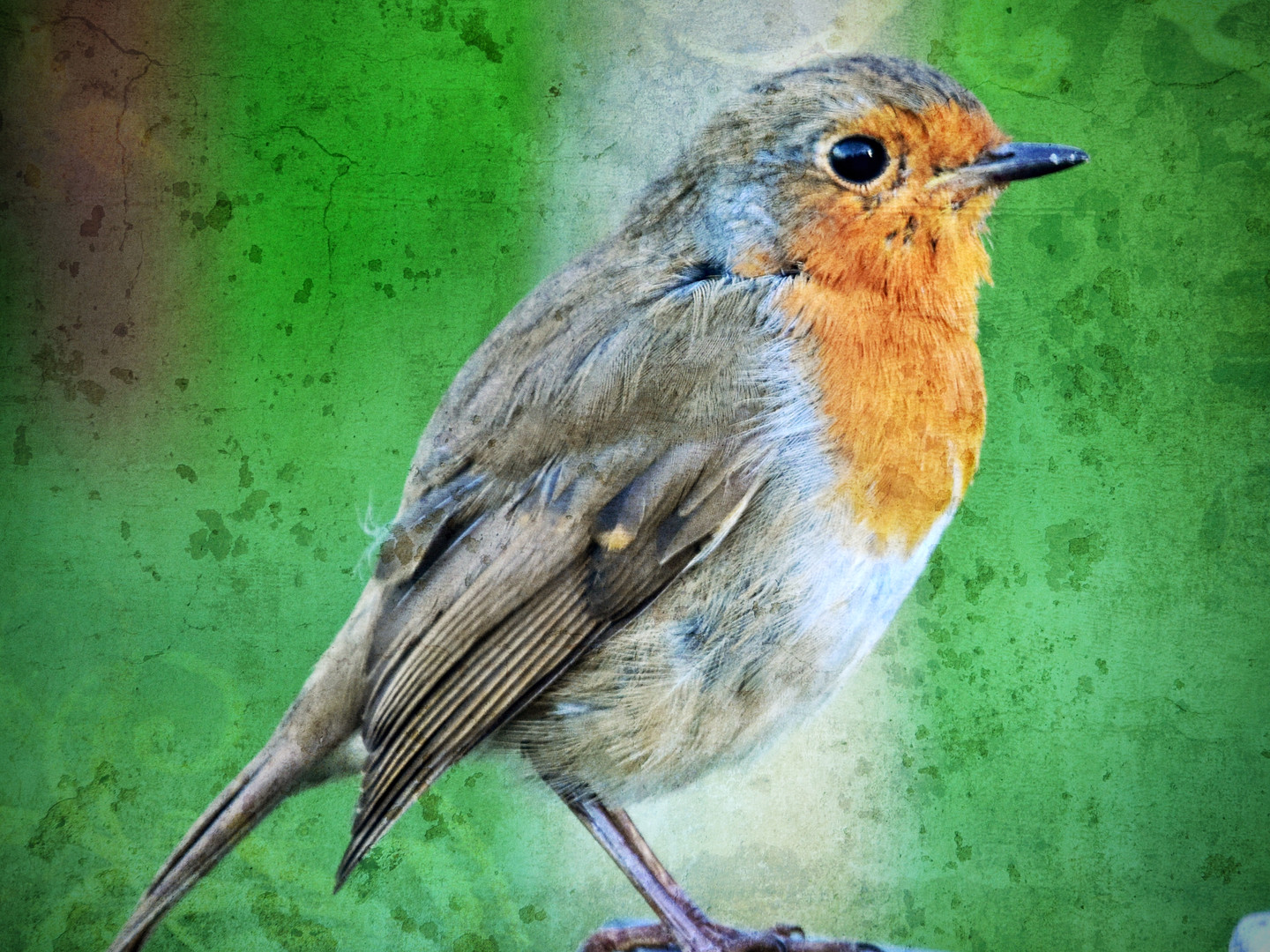 English Robin in a Churchyard