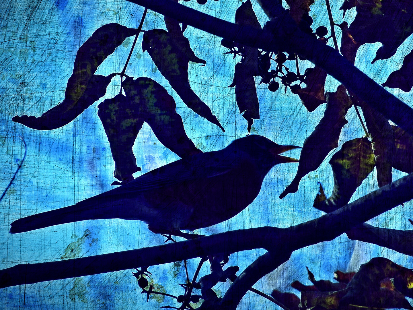 Talking Robin Silhouette