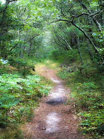 Foss Woods
