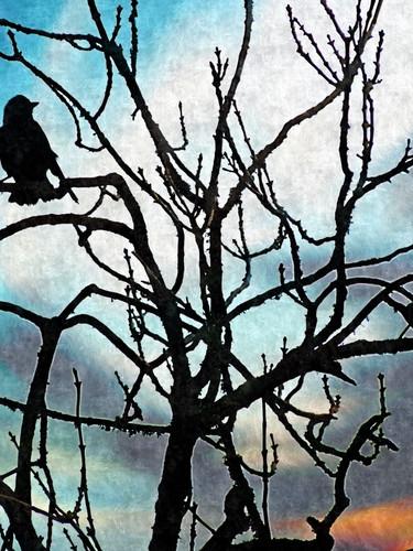 Bird Silhouette - Leafless Tree