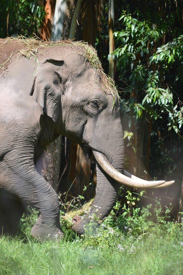 elephant in assam