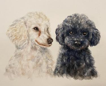 Boris & Basil (commission)