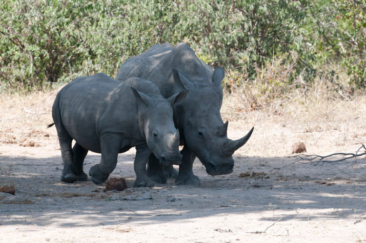 White Rhino.jpg