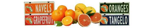 fruit pic.jpeg