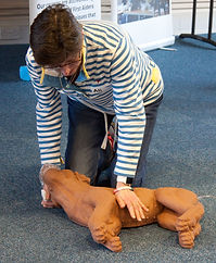 Dog CPR canine resuscitation chest compression