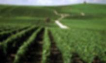 Chanpagne-wine-region-300x180.jpg
