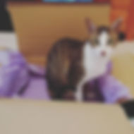 A rather guilty-looking tabby and white cat, sitting in an open brown cardboard box, which contains purple tissue paper.