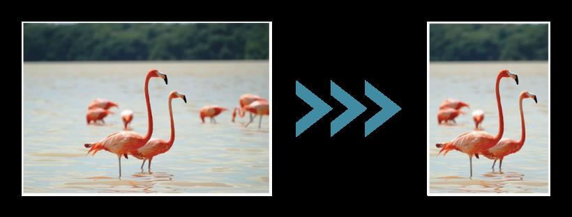 linkes Bild: Bild mit Flamingos; Pfeil nach Rechts; Bild mit Flamingos zurecht geschnitten